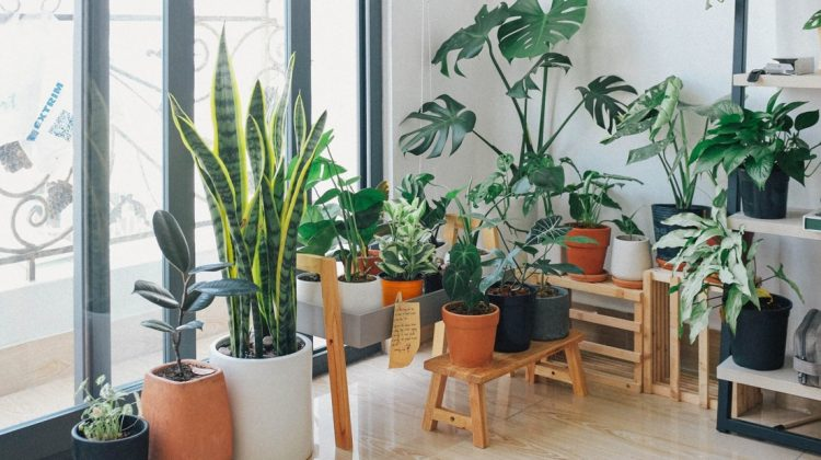 Houseplants Are Usually Better Outdoors Rather Than Indoors
