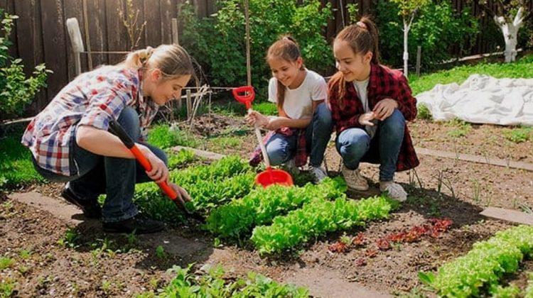 Social Capital, Community Gardening, And Neighborhood Meetings