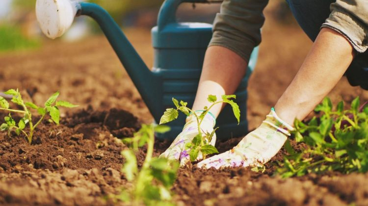 Gardening And Its Psychological Benefits: Experience of Nature